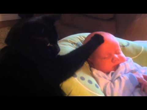 Bild: Katze wiegt Baby in den Schlaf