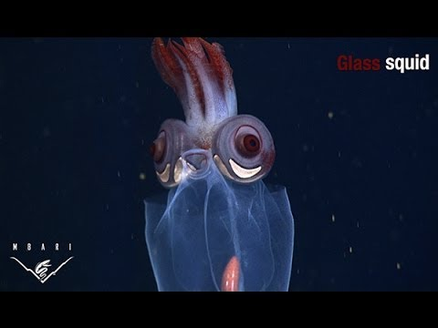A Wonderfully Eerie Compilation of Deep Sea Creatures With Unusual