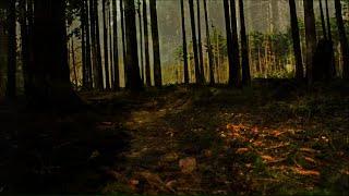 Video Lee – The Roaming Mind (Lyric Video)