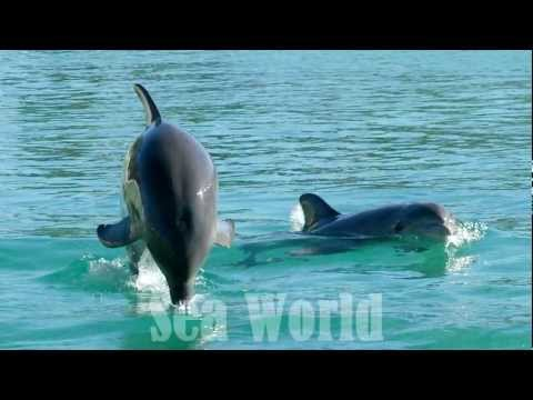 Sea World Queensland Australia