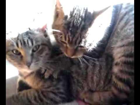 Masaż erotyczny kotek