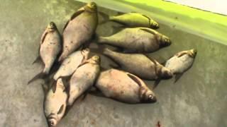 Иваньковское водохранилище - Зимняя рыбалка 2013