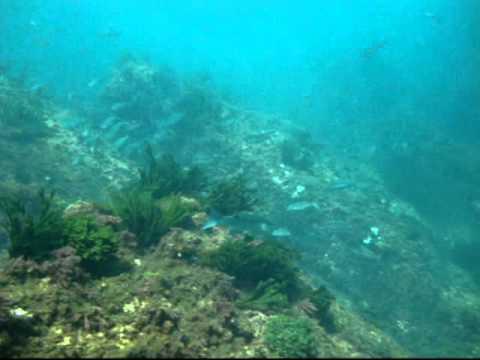buceo en Cotonera 28-07-10