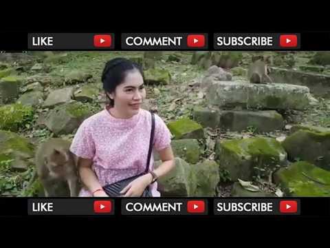 Download Video MONYET MESUM RAYU PEMBANTU CANTIK HINGGA DI GITUIN