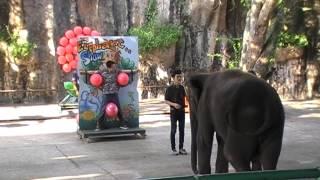 Funny Elephant Show At Srirach Tigger Zoo Pattaya Thailand