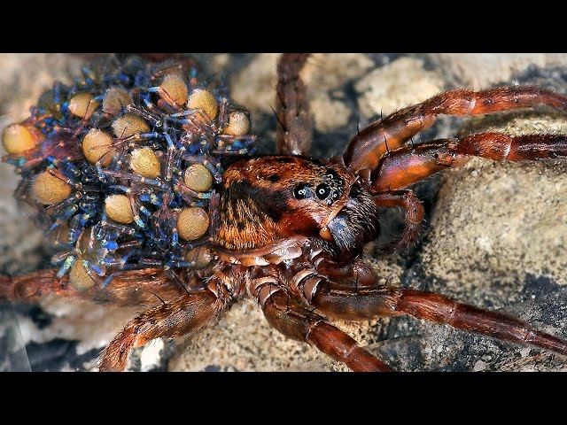 14 World S Largest Spiders | Free MP3 Download