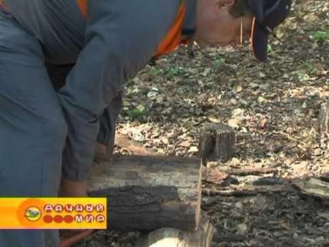 Как свалить дерево бензопилой