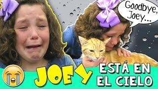 😿 Nuestro Gatito está EN EL CIELO (No clickbait) 💔 Le decimos ADIÓS a JOEY 💔 El VLOG más TRISTE