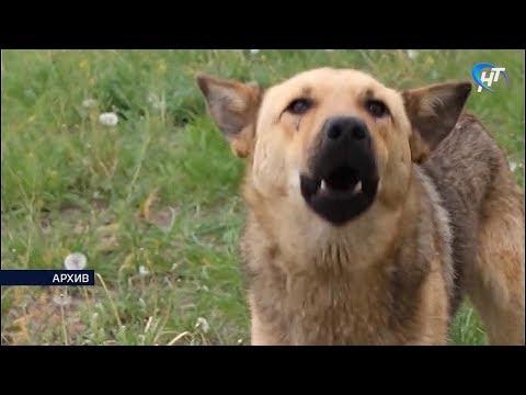 В Великом Новгороде наконец-то нашли место для бездомных животных