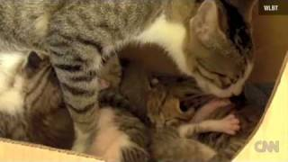 A Mississippi couple says their cat has adopted a squirrel that now purrs like a kitten.