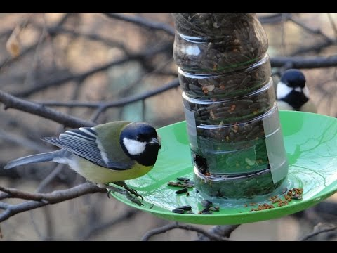 Видео кормушки для птиц