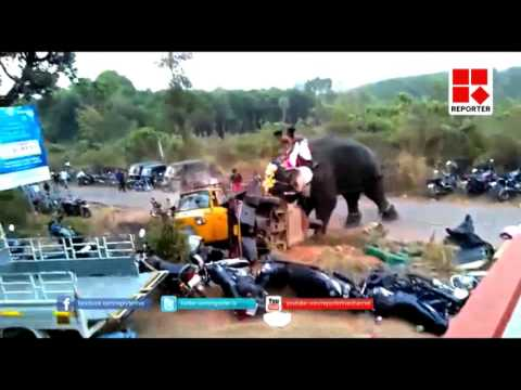 Elephant Rampage at temple