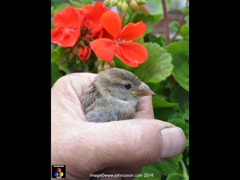 How to attract and photograph wild birds in your garden