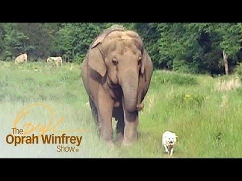 這隻大象連續3個星期每天都站在同一個地方,看到牠等著的對象終於出現後…那畫面太值得噴淚了!