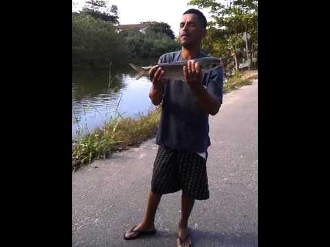 pesca da tainha em ubatuba no rio tavares.