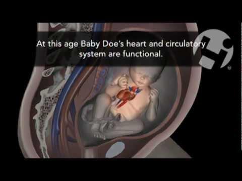 Преждевременные роды в 35 недели беременности