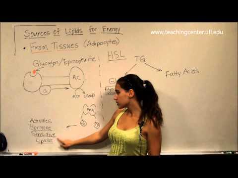 Lipid Metabolism