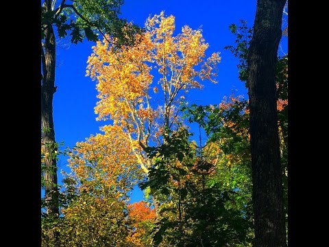 Basic Forestry Tree Measurements