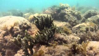 Diving Bahia de los Angeles