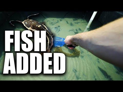 FINAL FISH ADDED to the POND aquarium