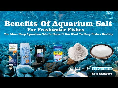 Benefit of Aquarium Salt for fishes  How To Use Aquarium Salt Aquarium salt tips and Tricks_Akvárium