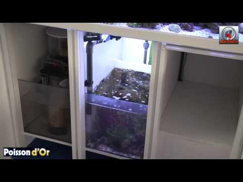 Comment demarrer un aquarium d 39 eau de mer la r ponse est for Construire un aquarium