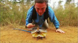 Most terrible animal attack in the world :))