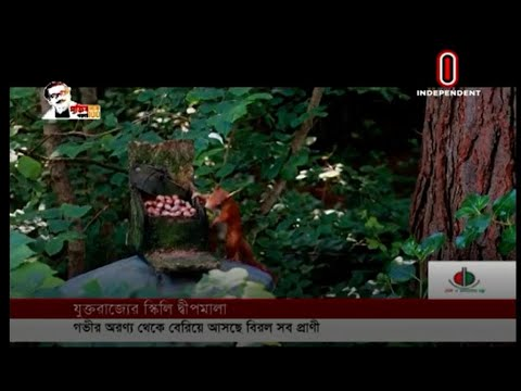 Wildlife is enjoying the absence of humans in nature (14-08-2020) Courtesy: Independent TV