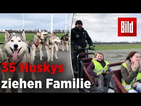 Mit dem Hundeschlitten durch die Stadt – 35 Huskys ziehen Familie durch Hatten