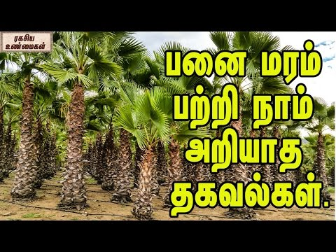 Unknown Facts About Palm Tree