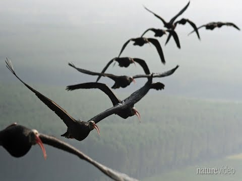 Why birds fly in a V formation