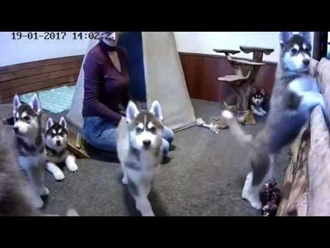 Хасята. Встреча гостей из Новосибирска. (звук) 2 часть. (видео)