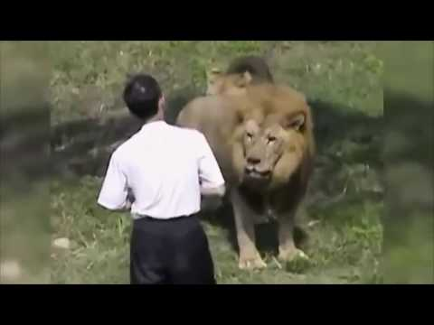 When Zoo Animals Attack Compilation