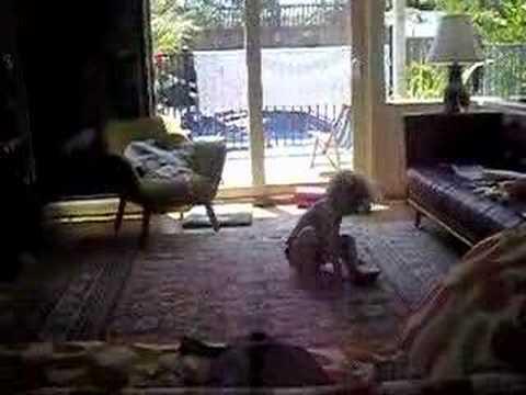 Edie - Boxing Day 2006 (видео)