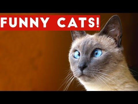 Funny Cats Compilation 2017 | Best Funny Cat Videos Ever (видео)