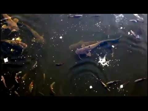 фильмы о рыбалки чернобыль