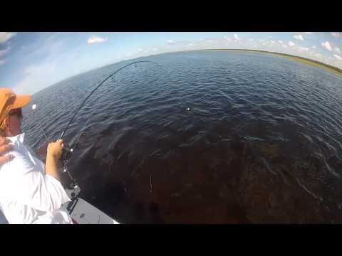 Florida Saltwater Flats Fishing Charters Catching A Stingray And A Shark