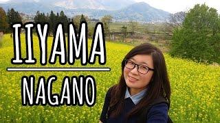 Iiyama Japan  city photos gallery : Explore Japan's Countryside in Iiyama, Nagano [ft. Iiyama Nanohana Park etc 飯山市 長野県]