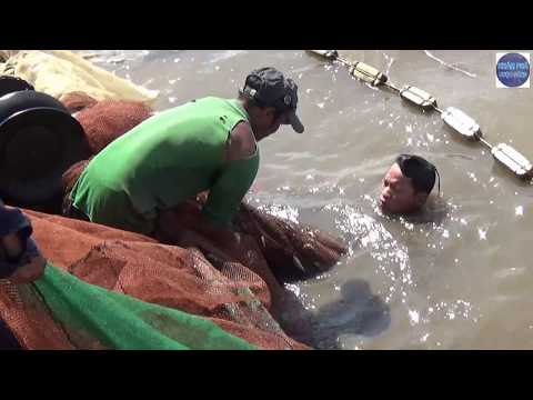 Bao lưới trúng bầy cá khủng ở mé biển Kiên Giang/catch fish in vietnam - Thời lượng: 15:01.