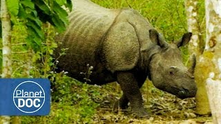 Kaziranga India  City pictures : Indian Rhinoceros Full Documentary | On The Tracks Of The Unicorn - Planet Doc Full Documentaries