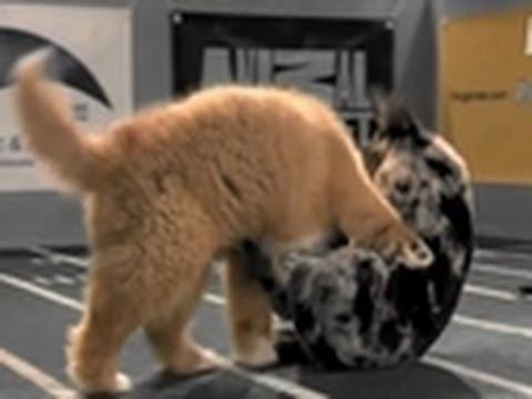 Puppy Bowl V: Fur Flies!