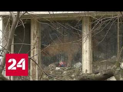 Квартира с собаками: хозяева не только любят зверей но и едят - DomaVideo.Ru