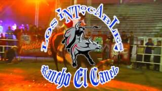 AYA NOS VEMOS ESTE 25 DE JULIO EN MAXTLECA DE GALEANA ESTADO DE MEXICO, CON LOS TOROS INTOCABLES DE RANCHO EL CANELO DEL SEÑOR HUMBERTO CASTRO DE POLOLCINGO GUERRERO.