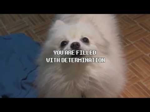 All Gabe The Dog Undertale Songs Compilation.