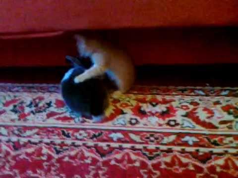Котик vs Кролика - YouTube