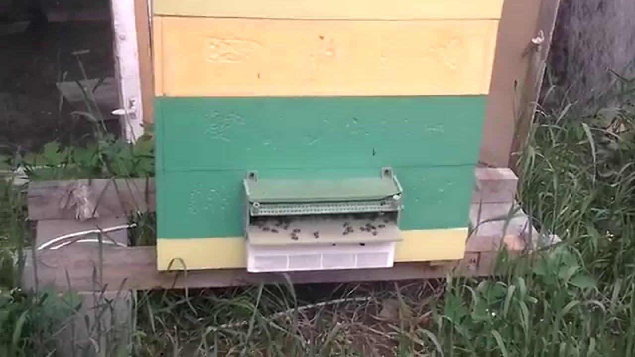 Пчеловодство. Смотреть онлайн: Пчеловодство.Подарили улей из ППУ.