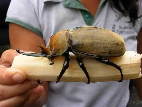 insetti giganti, inquietanti mostri dalla natura
