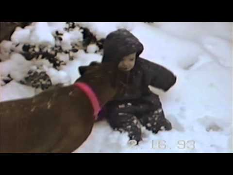 Dog Knocks Over Baby In The Snow