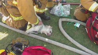 Firefighters save a dog after it's owners managed to escape a fire at their home but were unable to find their pet. Report by Charlotte Brehaut.