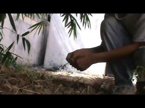 Como sembrar hortalizas videos videos relacionados con for Como cultivar hortalizas